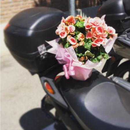 fiori scooter